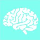 Steckbrief: Gehirn